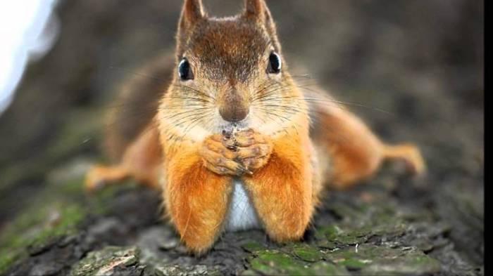 Ils sauvent un écureuil, il revient les voir régulièrement depuis sept ans