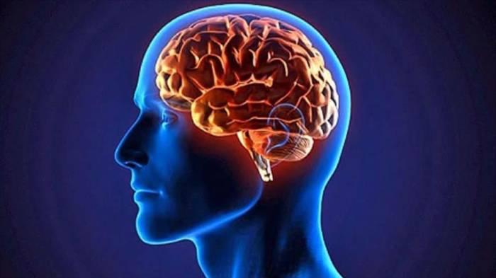 Descubren que el cerebro humano puede operar en 11 dimensiones