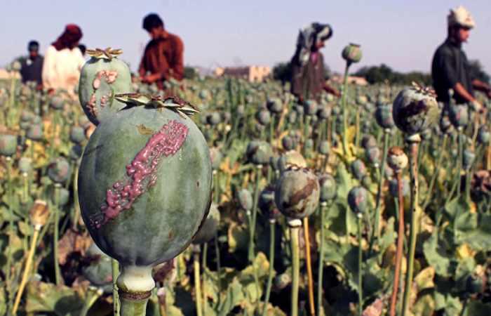 Après le pétrole, l'opium, nouvelle source de financement de Daech