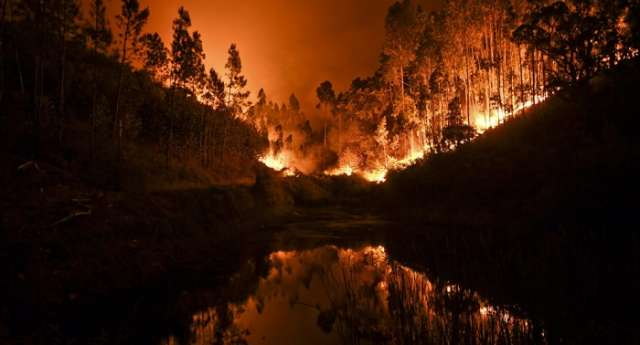 EU countries to help Portugal in fighting deadly wildfire - EU Commissioner