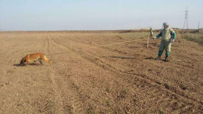 ANAMA finds 20 UXOs in Aghstafa