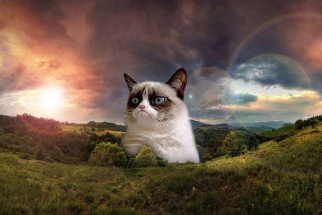 Grumpy Cat awarded $710K in lawsuit, but of course she still won't crack a smile