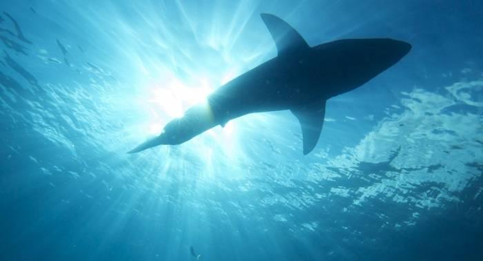 Australie: un surfeur grièvement blessé par un requin