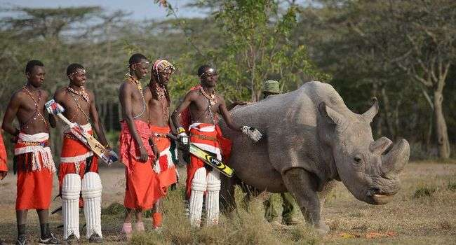 Kenya : mort de Sudan, le dernier rhinocéros mâle blanc du Nord