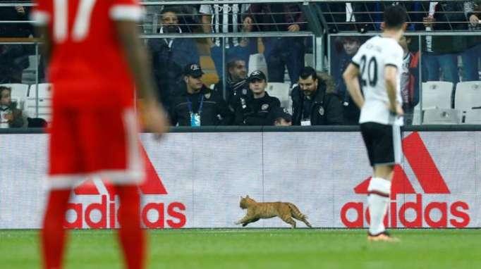Flauschiger Flitzer: Katze stört Spiel Besiktas gegen FC Bayern – UEFA will türkischen Club strafen