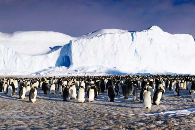 Penguins find camera on ice during Antarctic expedition, take selfie