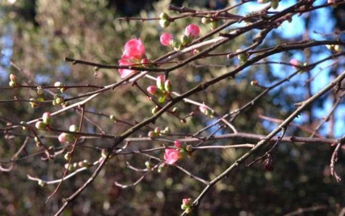 Pourquoi le printemps débute le 20 mars