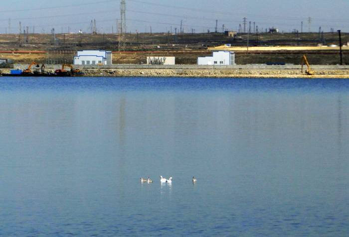 Lakes on Absheron peninsula to be restored