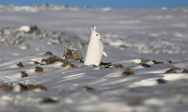 Arctic spring is starting 16 days earlier than a decade ago, study shows