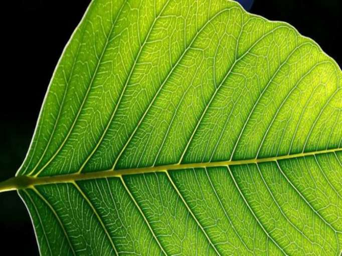Scientists develop artificial photosynthesis to produce energy