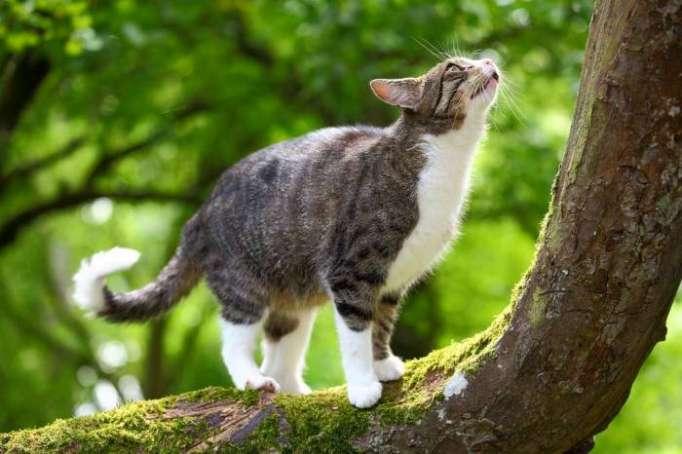 Pourquoi les chats se dandinent-ils avant de bondir?