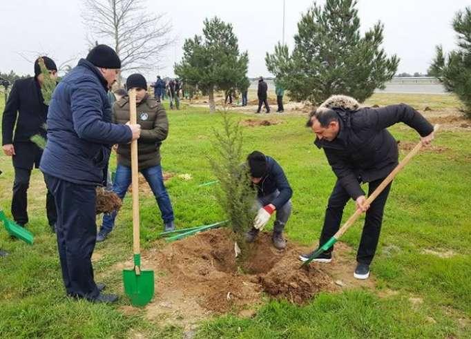 DTX əməkdaşları ağacəkmə aksiyası keçirib