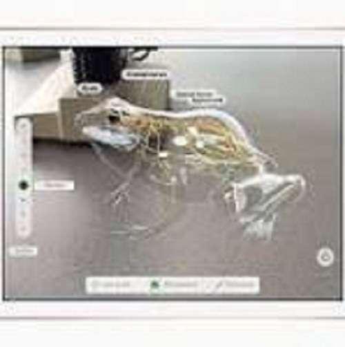 Apple presenta nueva iPad para la escuela