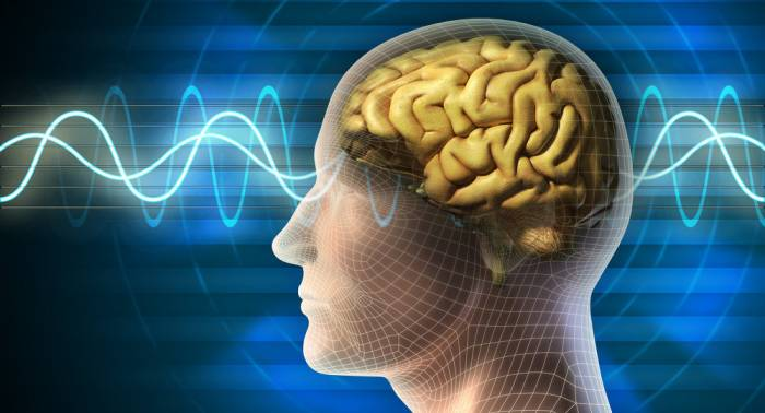 Des scientifiques découvrent comment mémoriser une information plus rapidement