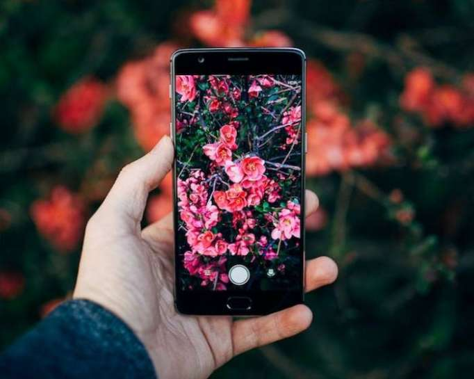 """Shazam for Nature"" App identifies plants and animals in your photos"