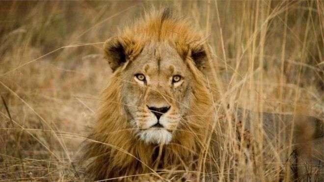 الحيوانات المحبوبة أكثر عرضة لخطر الإنقراضالحيوانات المحبوبة أكثر عرضة لخطر الإنقراض