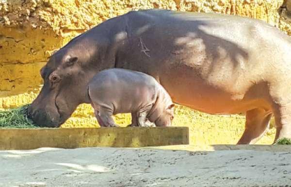 حديقة الحيوانات بالعين تستقبل 600 حيوان في 2017