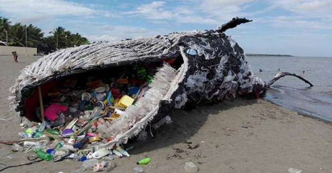 Another dead whale is grave reminder of our massive plastic problem