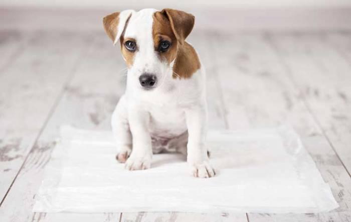 Une maladie venue des chiens menaçant l'homme se propage aux USA