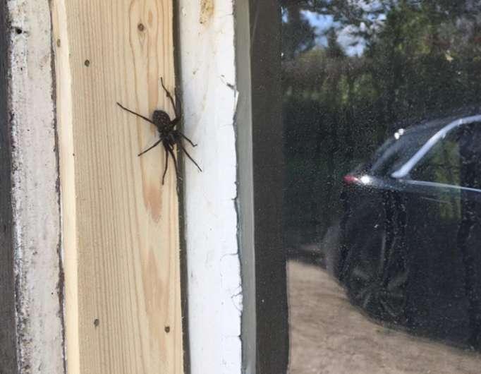 Comment éloigner les araignées de la maison