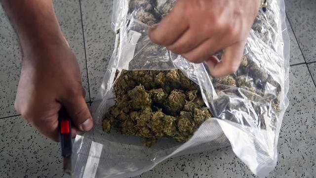 Des policiers prétendent que des souris ont mangé le cannabis saisi