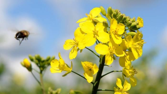 Warum dieser Biologe nichts gegen genveränderte Pflanzen hat