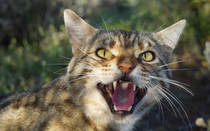 Australie : la plus grande barrière du monde contre les chats