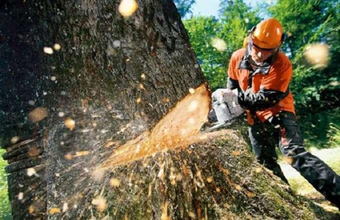 229 ağac qanunsuz kəsilib-