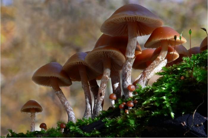 Mushroom Poisoning Death Toll in Iran Rises to 11