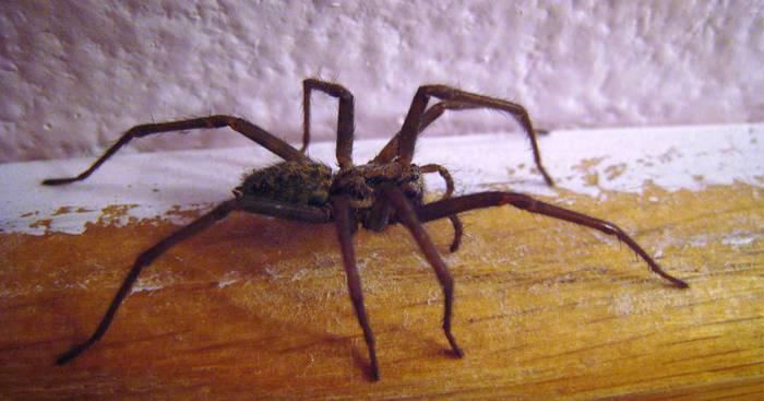 Phobie : ne laissez plus les araignées entrer chez vous