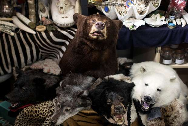 Illegal online sales of endangered wildlife rife in Europe