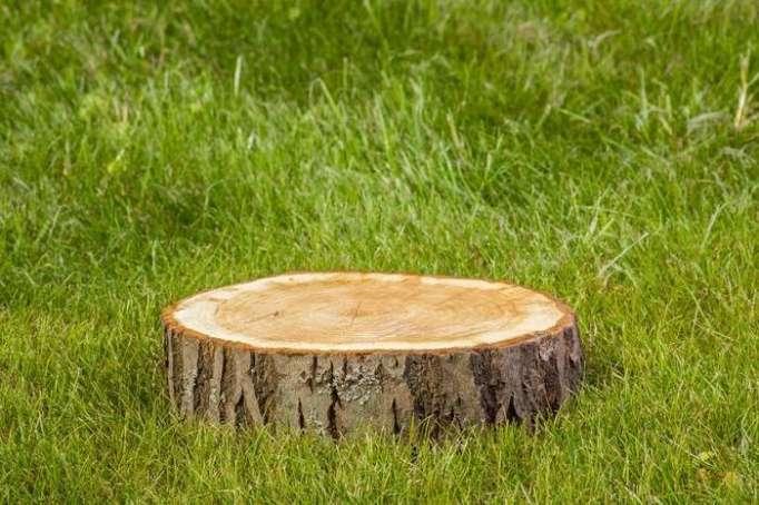 Qanunsuz ağac kəsimi ilə bağlı daha bir fakt
