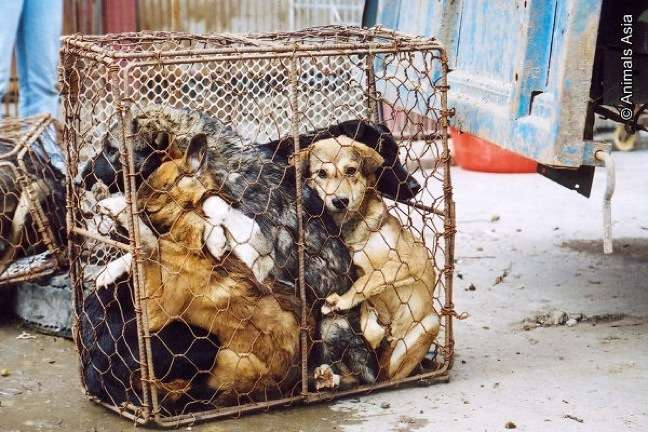 The shocking truth behind the Yulin Dog Meat Festival