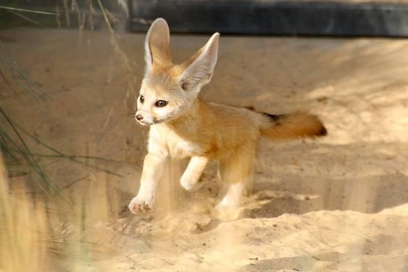 حيوانات لا توجد إلا في العالم العربي