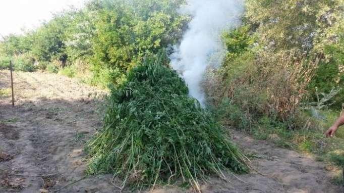 4 ton narkotik məhv edilib