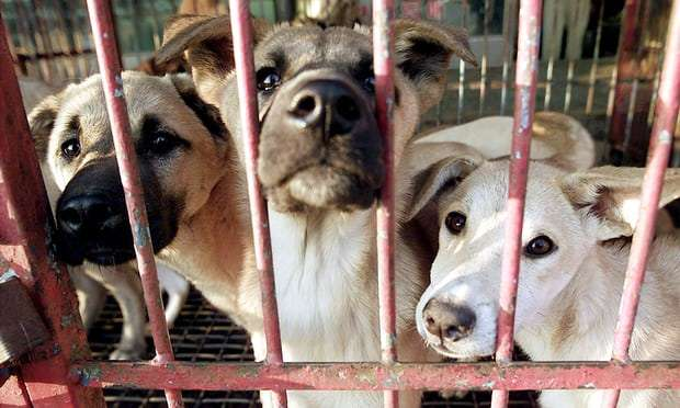 Killing dogs for meat ruled illegal by South Korean court