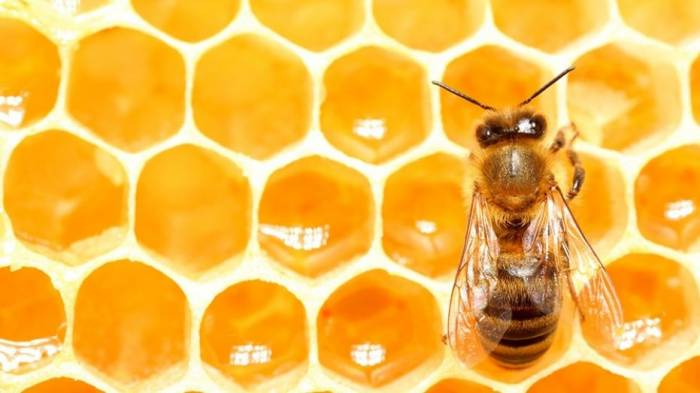 Honeybees know a lot about nothing
