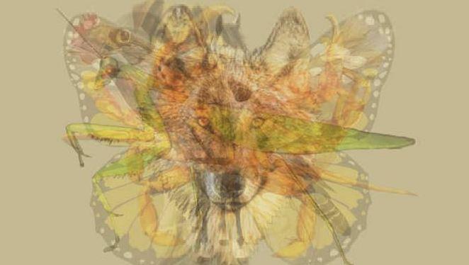 Le premier animal que vous voyez sur cette photo indique les traits dominants de votre personnalité