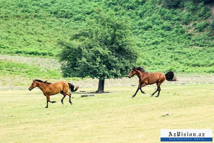 Faszinierende Natur von Gabala - PHOTOEPORTAGE