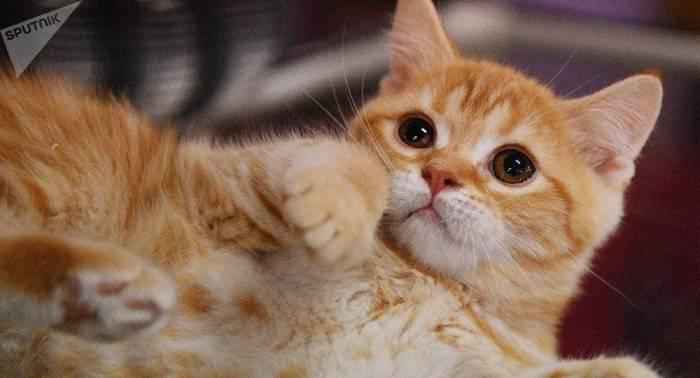 Les chats pressentent un séisme 10 secondes avant son début - VIDEO