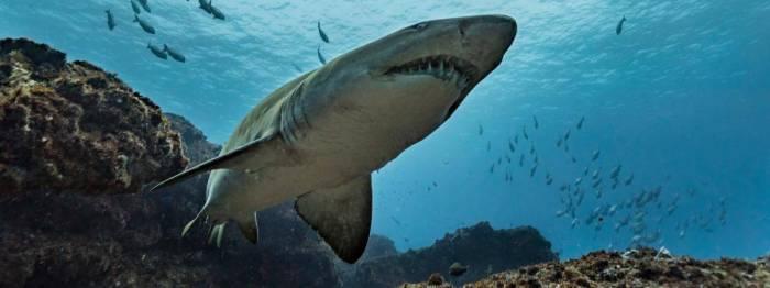 En pleine séance photo, un mannequin se fait mordre par un requin