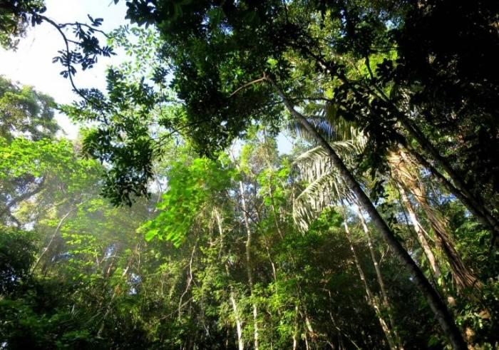"""América Latina, región """"negra"""" para ambientalistas"""