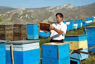 Azerbaijan Beekeepers Association talks beekeeping project in Jojug Marjanli