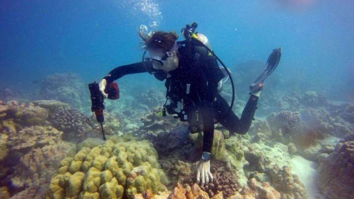 Scientists may have figured out how to save coral reefs