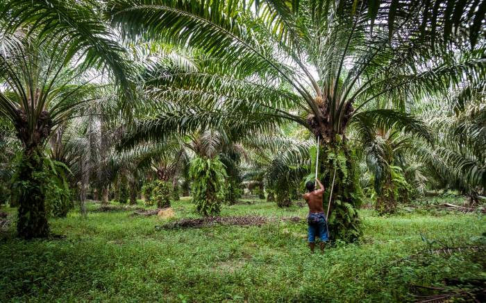 Warning of palm oil threat to primates