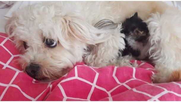 Tierquäler in Österreich: Hund verschluckt Knackwurst mit Nadeln