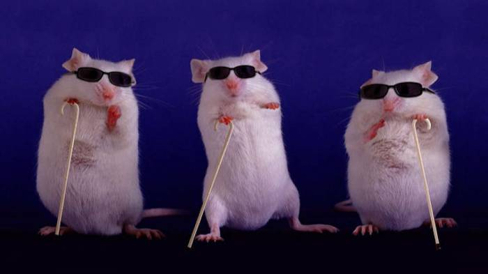 Scientists use gene therapy to restore sight in blind mice