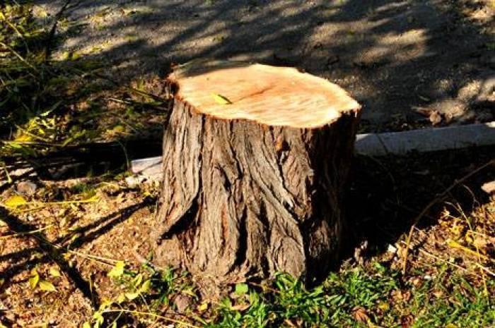 Qanunsuz ağac kəsilməsi aşkar edilib