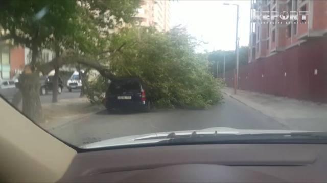 Bakıda güclü külək fəsadlar törədib - VİDEO