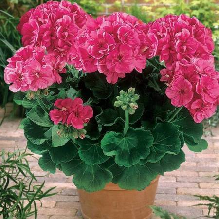 Keep mosquitoes away byplanting certain plants inyour garden